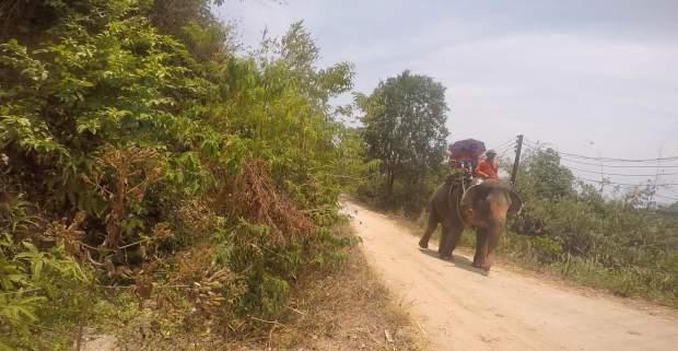 elephant_trail1